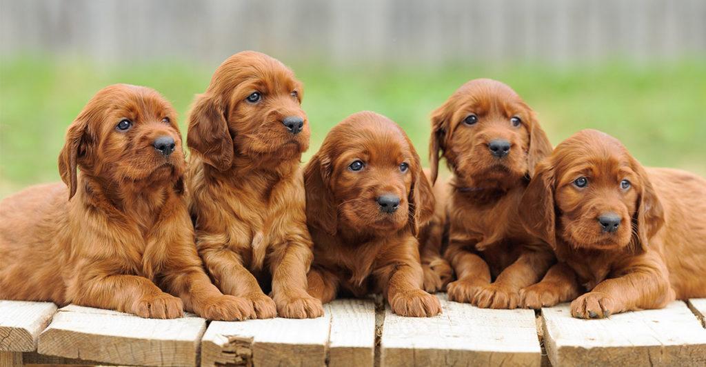 Free Dog Training Guide