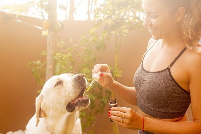 CBD Oil and Other Products for your Pets